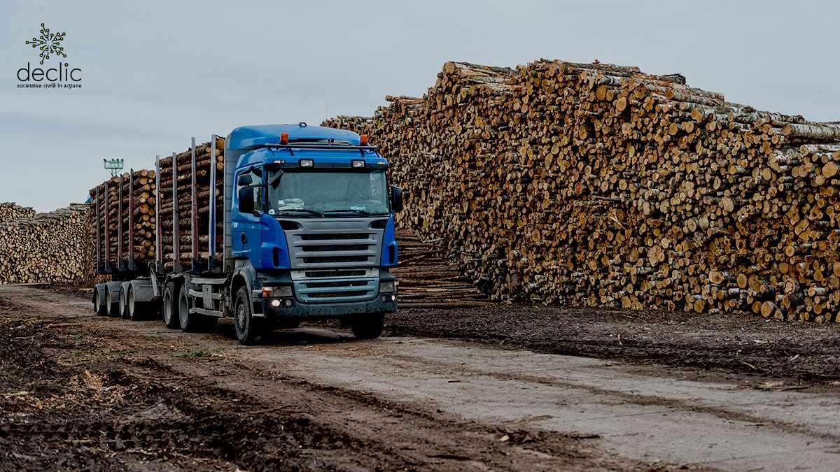 Parlamentarii vor să ofere din nou monopol marilor companii de pe piața lemnului din România