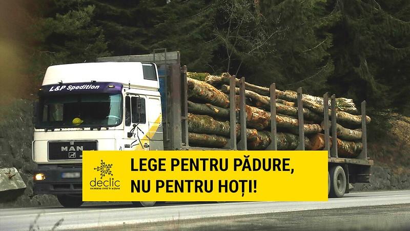 Cerem senatorilor să aprobe un proiect care poate salva pădurea de tăieri masive