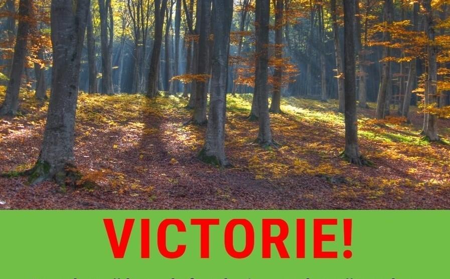 Victorie uriașă pentru păduri