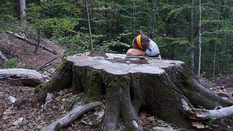 pădure tăiata