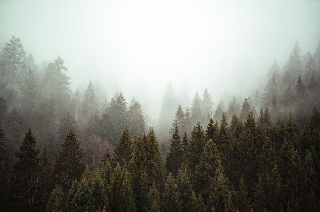 Păduri - următorul pas